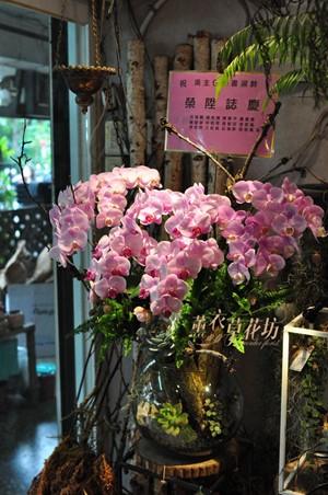 蝴蝶蘭/玻璃缸/多肉設計 109022701