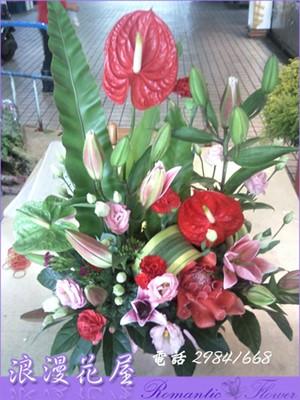 盆花 F39