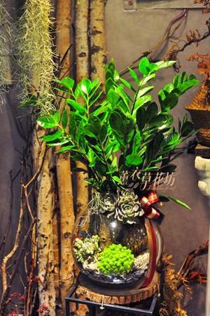 金錢樹&多肉&玻璃缸 設計 108041201