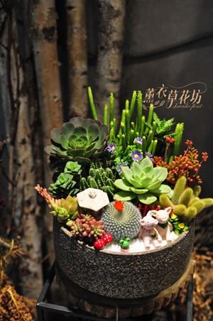 多肉植物設計109033012
