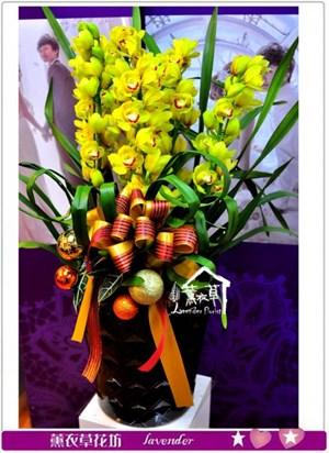 黃金虎頭蘭a011921