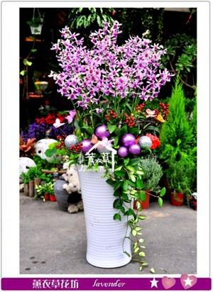 石斛蘭蘭花c102401