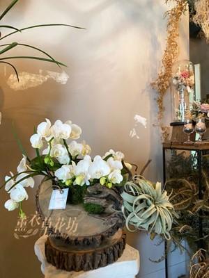蝴蝶蘭/天然木片設計110091612