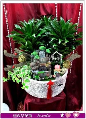 阿波羅設計盆栽c032001