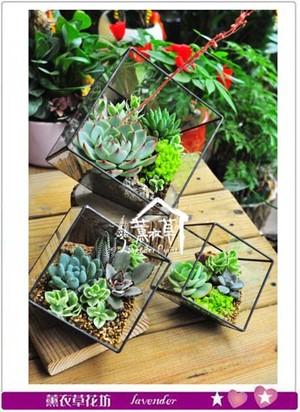 缺貨-水立方立體玻璃&多肉設計(中) 107042005