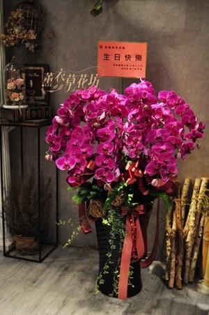 蝴蝶蘭/蘭花盆栽109051909