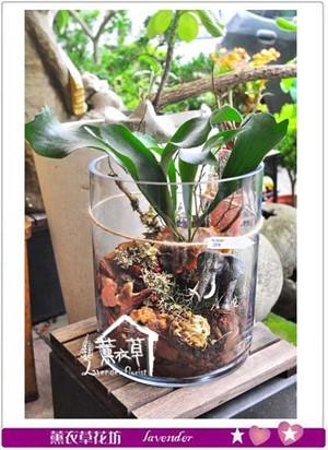 侏儸紀系列~生態缸植物設計 107061913