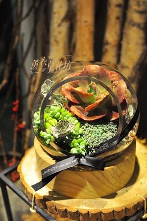 多肉植物設計 108042302缺貨