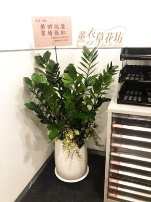 金錢樹盆栽 110100233