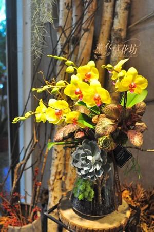 黃金蝴蝶蘭設計108050302