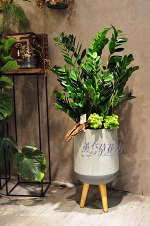 金錢樹盆栽設計 108082410