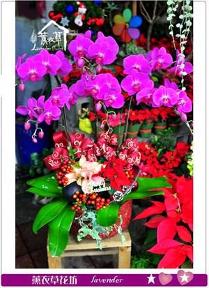 高雅蝴蝶蘭c120315