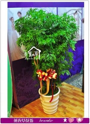 富貴樹a100216