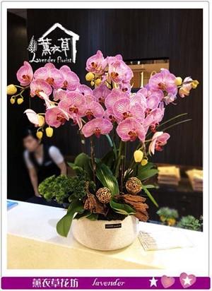 蝴蝶蘭/蘭花系列 107071320