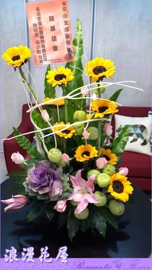 盆花 F48