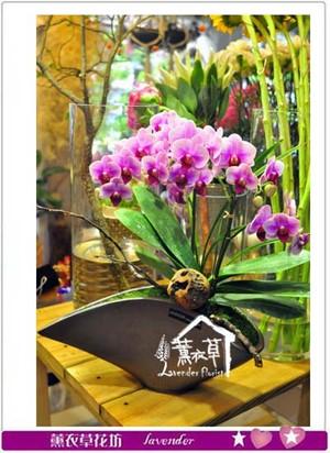 蝴蝶蘭設計~b111302
