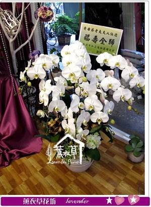 白色蝴蝶蘭7朱y344982