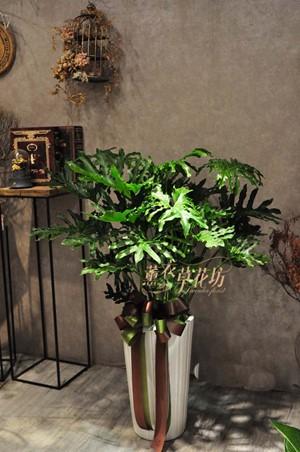 天使盆栽 106102510