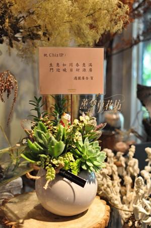 多肉植物一盆-台北市免運 109041611
