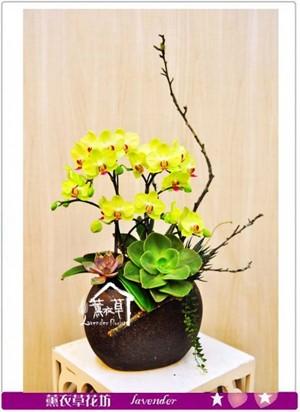 黃金蝴蝶蘭禮盆b040111