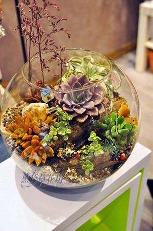 玻璃缸&多肉植物設計108031105