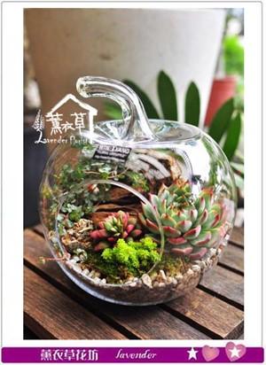 多肉植物&蘋果造型玻璃缸109102601