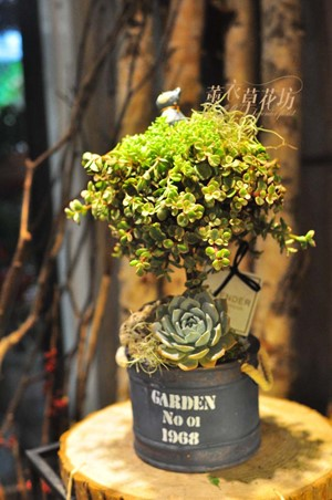 許願樹~多肉植物設計B100102