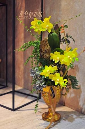 黃金蝴蝶蘭設計 108041001