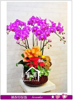 胡蝶蘭禮盆B120707